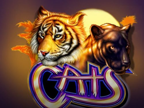 Play Cats for Free